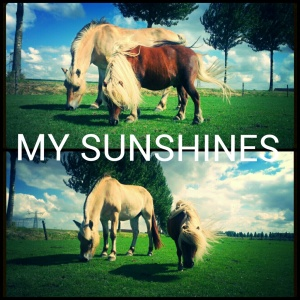 Linda paarden
