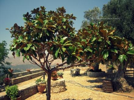 flora en fauna Kreta Blog