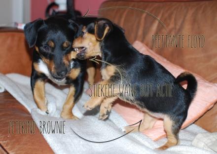 Floyd en Brownie