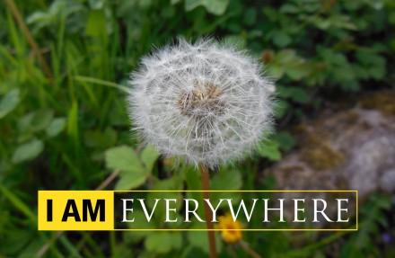 I AM Nikon everywhere